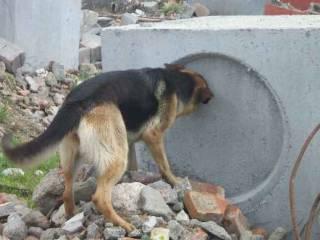 ginástica proprioceptiva para cães